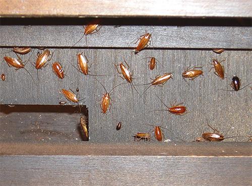 Как избавиться от муравьев: народные средства Своими