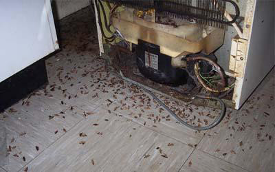 Уничтожение тараканов в квартире своими руками