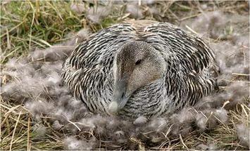 Как выбрать пуховое одеяло по весу
