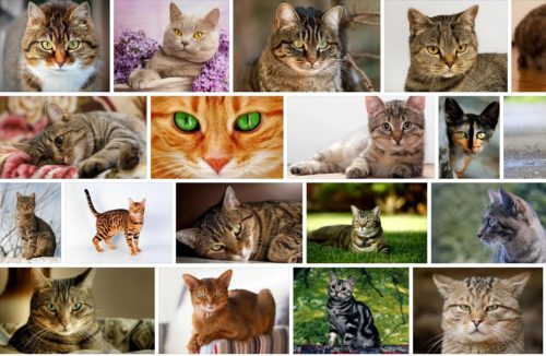 Имена для кошек (клички)