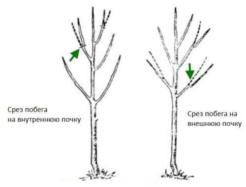 Кронирование деревьев: секреты и стоимость0